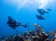 Guided dives with group in Eilat
