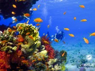 Diving - fascinating sport and an adventure