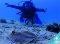 дайвинг в эйлате - встреча со скатом_diving in Eilat - a meeting with stingray_)צלילה באילת - פגישה עם הרמפה