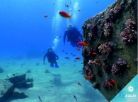 дайвинг курсы в эйлате - дайв сайт кораловый пляж_קורסי צלילה באילת - אתר צלילה חוף אלמוג_diving courses in Eilat - dive site Coral Beach