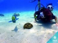 diving snorkel_שנורקל צלילה_плавание с маской и трубкой