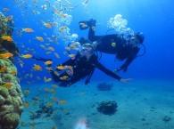 red sea scuba