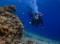 scuba diving introductory dive   Используется в ссылках на фотографию, заголовках.