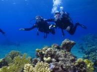 scuba red sea