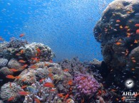 diving in red sea_дайвинг в красном море_צלילה בים האדום