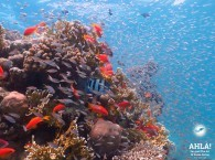 diving red sea_дайвинг красное море_ים אדום צלילה