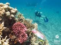 diving scuba_дайвинг_צלילה