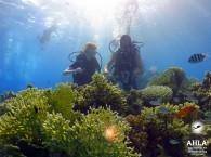learn scuba diving_учить дайвинг_ ללמוד צלילה