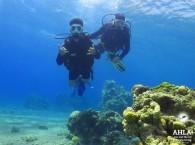 red sea diving packages_красное море путевка_חבילות צלילה בים האדום