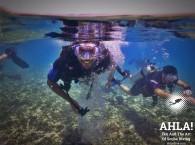 red sea diving_красное море дайвинг_צלילה בים האדום