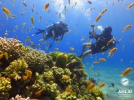 sea diving_море дайвинг_צלילה בים