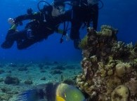 beatiful fish in Red Sea Eilat scuba diving courses