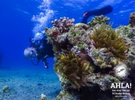 diving courses for beginners in israel