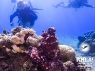 red octopus in Israel Eilat Red Sea