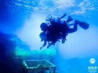 red sea eilat scuba diving