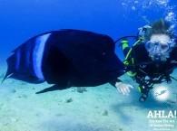 scuba diving in israel underwater world