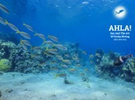 what to do in Eilat diving for beginners