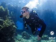 scuba diving trips red sea