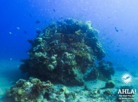 diving in the red sea eilat