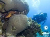 scuba diving red sea eilat