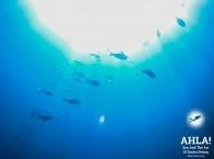 red sea diving eilat israel