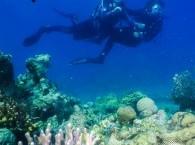 scuba diving eilat red sea israel