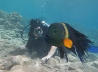 Рыба-кот в Красном море