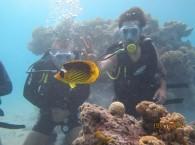Дайвинг в Эйлате на сайте Кораллового заповедника