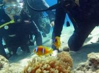 Рыбки Немо в Актиниях @ автор: Misha S