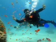 Ознакомительное погружение на Коралловом пляже Эйлата