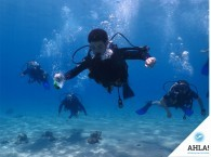 diving course Open Water Diver