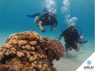 напарники под водой