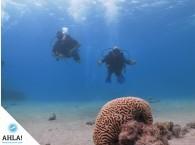 начинающие дайверы на Красном море в Эйлате