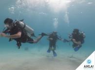 погружение с курсом Open Water Diver на дайв-сайте Эйлата - Nature Reserve