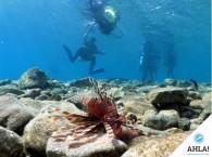 обучение дайвингу_learn_scuba_diving