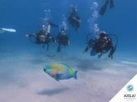 дайвинг для новичков_diving for beginners