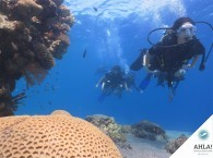 дайвинг сафари на Красном море_diving safari on Red Sea