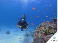 дайвинг лицензия_diving lisencejpg   Используется в ссылках на фотографию, заголовках.