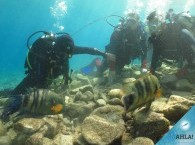 introductory dive in Eilat - 9