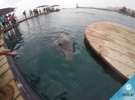 Дельфинарий Эйлата - Dolphin Reef Eilat
