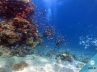 diving club in eilat - 7
