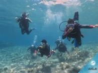 дайвинг курсы для начинающих в Эйлате_diving_courses_for_behinners_in_Eilat.jpgдайвинг курсы для начинающих в Эйлате_diving_courses_for_behinners_in_Eilat.jpg