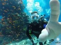 погружение в отрытой воде на курсе OW_dive in open water on course for behinners.jpg