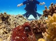 Каждому ли доступен дайвинг_whether diving is available each_אם צלילה זמינה בכל