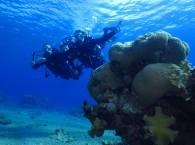 scuba diving courses red sea