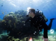 coral reef in eilat scuba diving