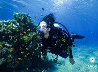 diving for beginners in eilat red sea
