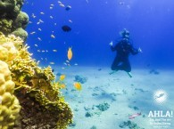 cheap diving holidays red sea eilat